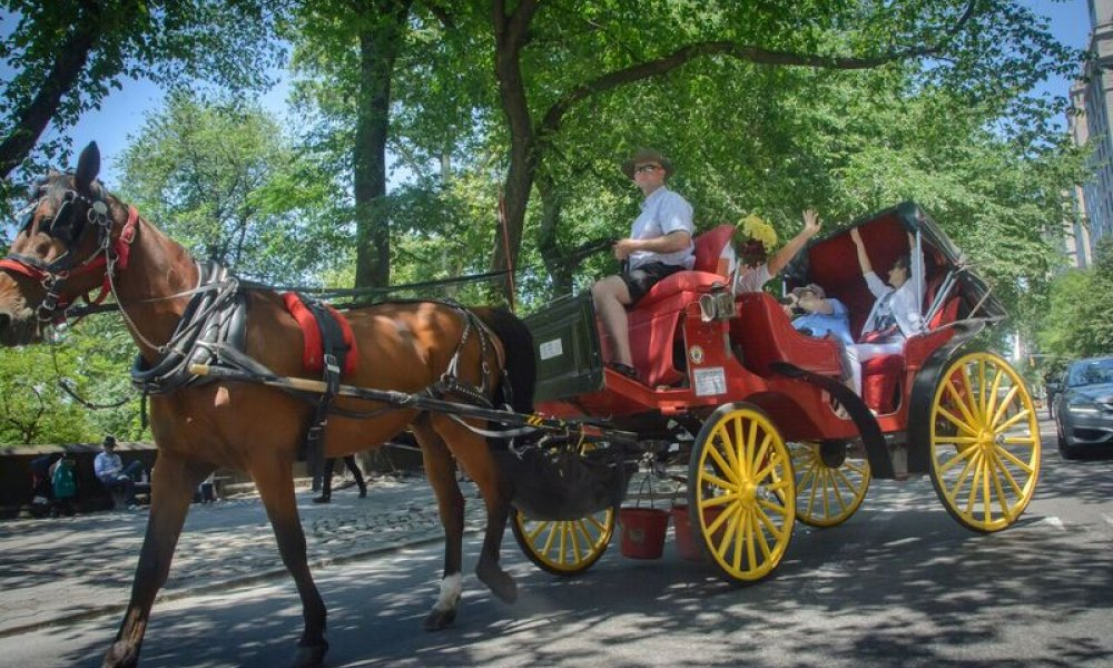 Horse Carriage, NYC, New York, New York City, Central Park, Ride, DMC, Destination Management